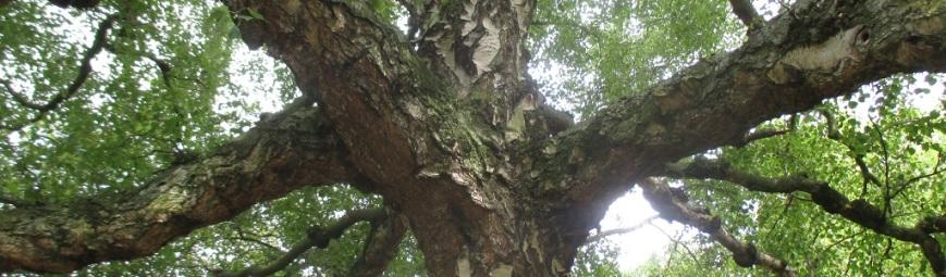 IMG_7686b0301h VE Memorial Gardens tree